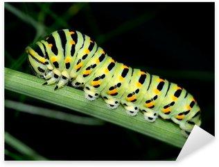 Naklejka Gąsienica makro. czarny nieustalona, Papilio polyxenes
