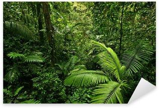 Naklejka Pixerstick Gęsty tropikalny las deszczowy