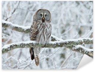 Naklejka Pixerstick Great Grey Owl (Strix nebulosa) siedzący na drzewie