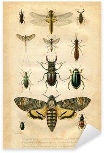 Naklejka Pixerstick Histoire naturelle: Les insectes