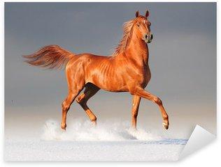 Naklejka Pixerstick Koni arabskich w zimie