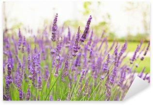 Naklejka Kwiaty lawendy kwitnące tło