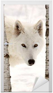 Naklejka na Drzwi Arctic Wolf widać między dwoma drzewami w zimie