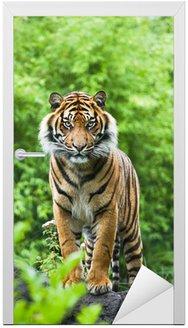 Naklejka na Drzwi Asian- lub Tygrys bengalski z bambusa krzewów tle
