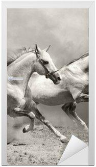 Naklejka na Drzwi Białe konie w kurzu