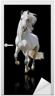 Naklejka na Drzwi Biały koń izolowane