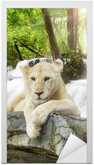 Naklejka na Drzwi Biały lew