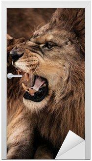 Naklejka na Drzwi Close-up strzał z ryczący lew i lwica