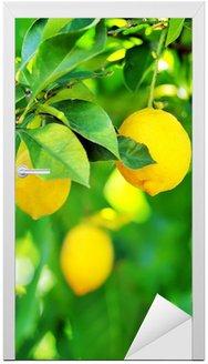 Naklejka na Drzwi Cytryny wiszące na drzewie