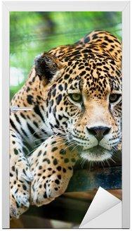 Naklejka na Drzwi Jaguar Ameryki Południowej