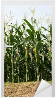 Naklejka na Drzwi Kolby kukurydzy na polu latem