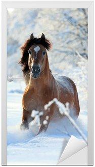 Naklejka na Drzwi Koń Bay działa w zimie