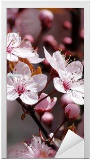 Naklejka na Drzwi Kwiaty wiśni