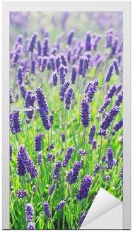 Naklejka na Drzwi Lawenda kwiaty kwitnące w Polu