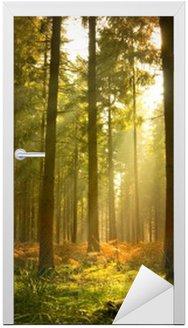 Naklejka na Drzwi Piękny las