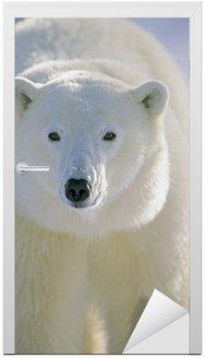 Naklejka na Drzwi Polar Bear, Churchill, Manitoba, Kanada.