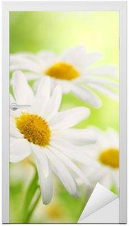 Naklejka na Drzwi Pole daisy kwiatów