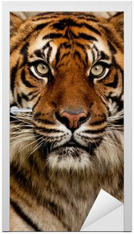 Naklejka na Drzwi Portret tiger