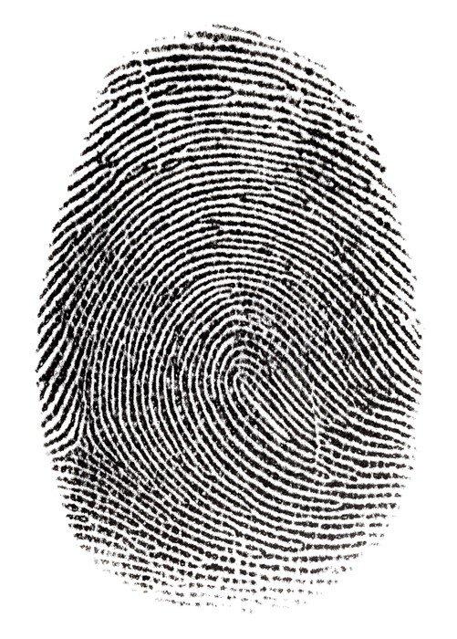 Naklejka na Drzwi Prawdziwe fingerprint w białym tle Super makro - Przestępczość