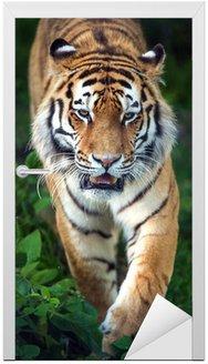 Naklejka na Drzwi Tygrys syberyjski