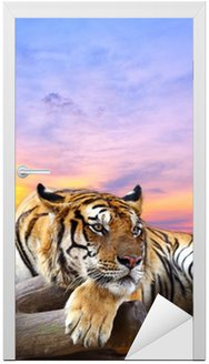 Naklejka na Drzwi Tygrys szuka coś na skale z piękne niebo o zachodzie słońca