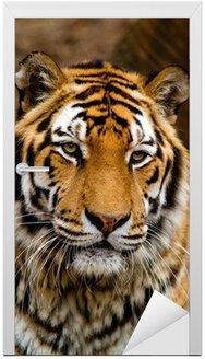 Naklejka na Drzwi Tygrys
