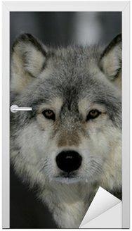 Naklejka na Drzwi Wilk, Canis lupus