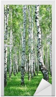 Naklejka na Drzwi Wiosna brzozowy las z śwież