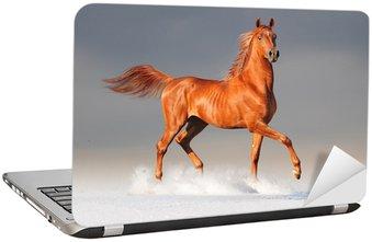 Naklejka na Laptopa Koni arabskich w zimie
