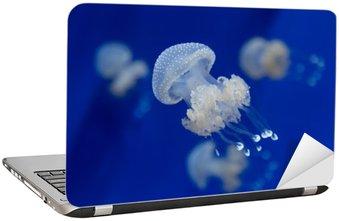Naklejka na Laptopa Medusa meduza nurkowanie zdjęcia egipt morze czerwone