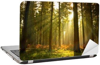 Naklejka na Laptopa Piękny las