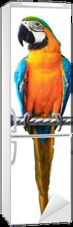 Naklejka na Lodówkę Kolorowe ara czerwony papuga na białym tle