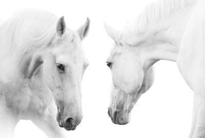 Naklejka na Ścianę Białe konie