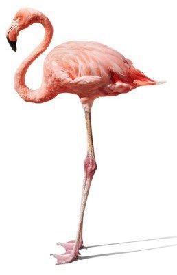 Naklejka na Ścianę Flamingo na białym