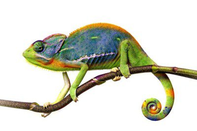 Naklejka na Ścianę Kameleon