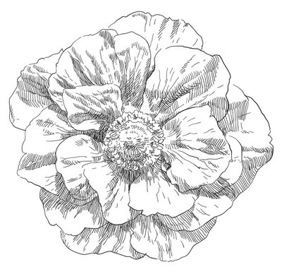 Naklejka na Ścianę Kwiat kwiat rysunek ręka