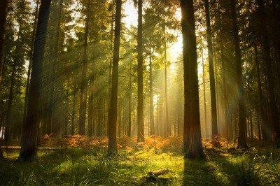 Naklejka na Ścianę Piękny las
