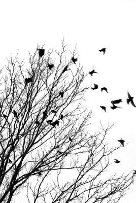 Naklejka na Ścianę Ptaki latające