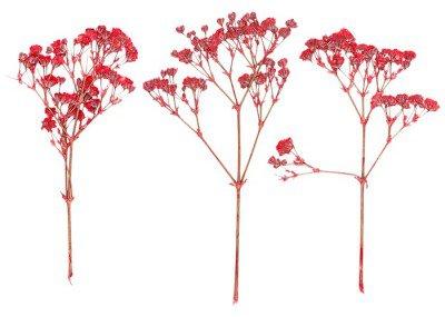 Naklejka na Ścianę Zestaw dzikich wciśnięty suchych kwiatów