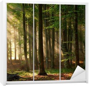 Naklejka na Szafę Drzewa las jesienią. charakter zielone światło słoneczne drewna tła.
