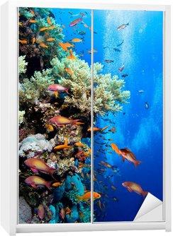 Naklejka na Szafę Zdjęcie kolonii koralowców