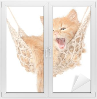 Naklejka na Szybę i Okno Słodkie rudowłosa kotka w hamaku