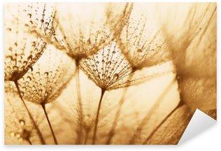 Naklejka Nasiona roślin z kropli wody