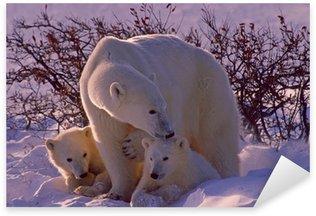 Naklejka Pixerstick Niedźwiedzie polarne w Arktyce Kanadyjskiej