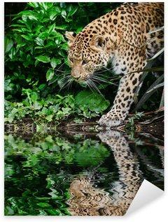 Naklejka Piękne leopard Panthera Pardus duży kot wśród listowia refleksja