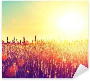 Naklejka Pole. Krajobraz obszarów wiejskich w ramach Lśnienie Sunlight