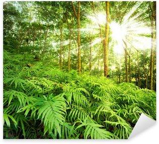 Naklejka Pixerstick Promienie słońca w lesie