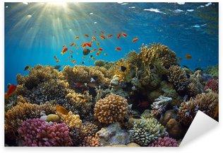 Naklejka Pixerstick Rafa koralowa