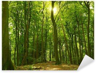 Naklejka Pixerstick Słoneczny letni las