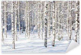 Naklejka Snowy pni brzozy